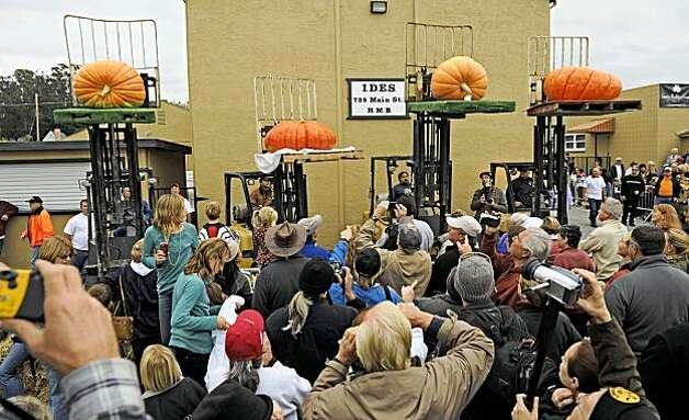 "The top four ""most beautiful pumpkins"" are raised on forklifts at the Half Moon Bay 36th Annual Safeway World Championship Pumpkin Weigh-off in Half Moon Bay on Monday. The pumpkin second from the left won the contest. Photo: Russel A. Daniels, AP"