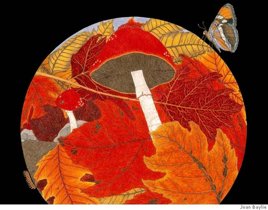 "art by Joan Baylie at Sticks Framing and Art Gallery, Albany. ""Fall"" is one of Joan Baylie's ""environmental drawing collages"" juxtaposing natural images to evoke a particular mood. Photo: Courtesy Of Joan Baylie"