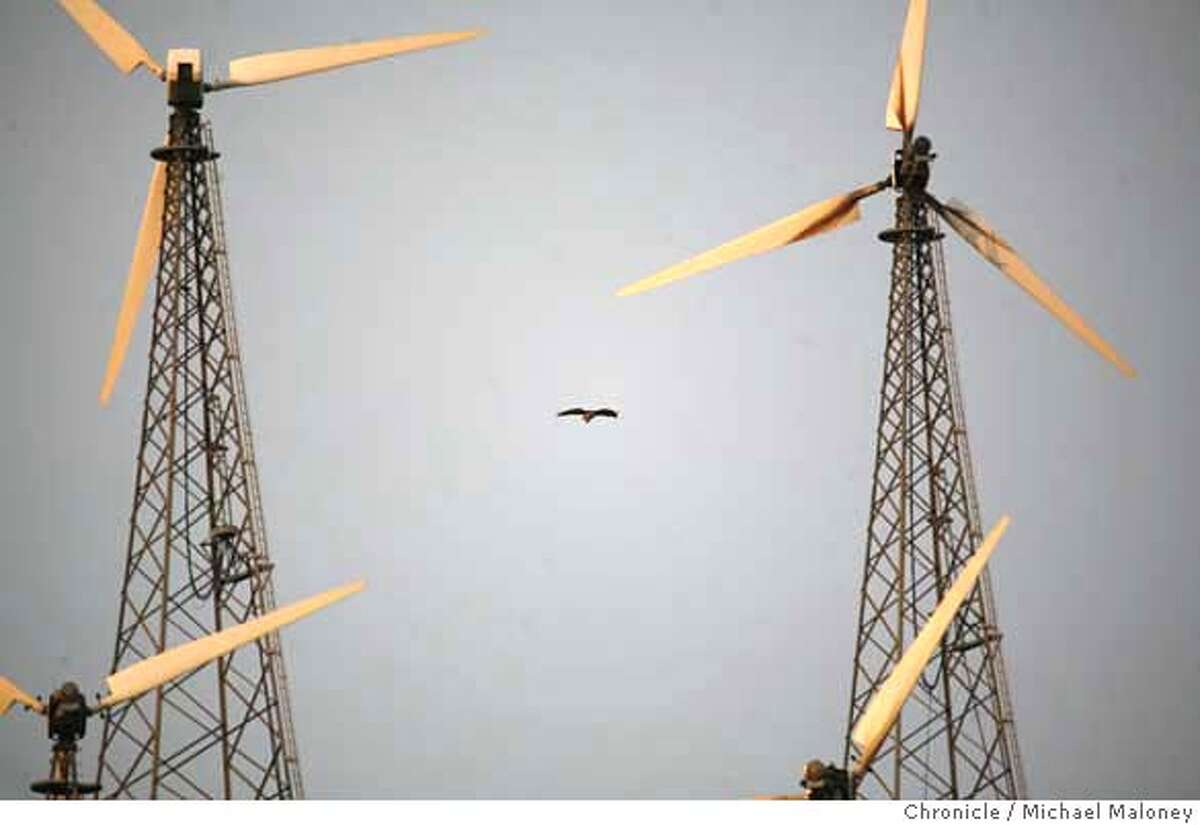 ###Live Caption:A hawk soars among the windmills along North Flynn Road in the Altamont Pass near Livermore, Calif. on May 8, 2008. Photo by Michael Maloney / San Francisco Chronicle###Caption History:A hawk soars among the windmills along North Flynn Road in the Altamont Pass near Livermore, Calif. on May 8, 2008. Photo by Michael Maloney / San Francisco Chronicle###Notes:###Special Instructions:MANDATORY CREDIT FOR PHOTOG AND SAN FRANCISCO CHRONICLE/NO SALES-MAGS OUT