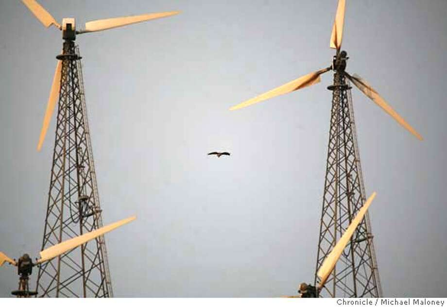 ###Live Caption:A hawk soars among the windmills along North Flynn Road in the Altamont Pass near Livermore, Calif. on May 8, 2008.  Photo by Michael Maloney / San Francisco Chronicle###Caption History:A hawk soars among the windmills along North Flynn Road in the Altamont Pass near Livermore, Calif. on May 8, 2008.  Photo by Michael Maloney / San Francisco Chronicle###Notes:###Special Instructions:MANDATORY CREDIT FOR PHOTOG AND SAN FRANCISCO CHRONICLE/NO SALES-MAGS OUT Photo: Michael Maloney