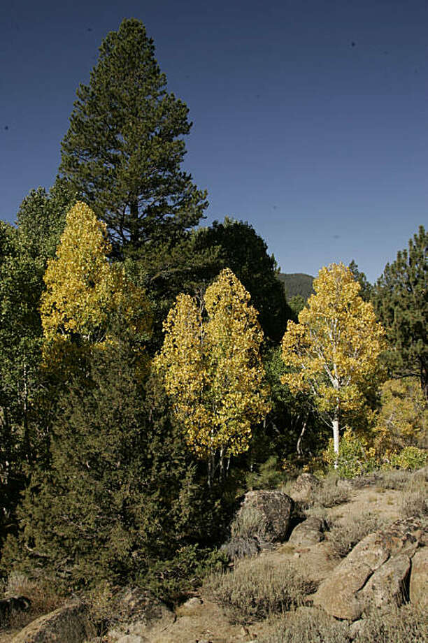 Fall colors in Hope Valley, California. Photo: Spud Hilton, The Chronicle