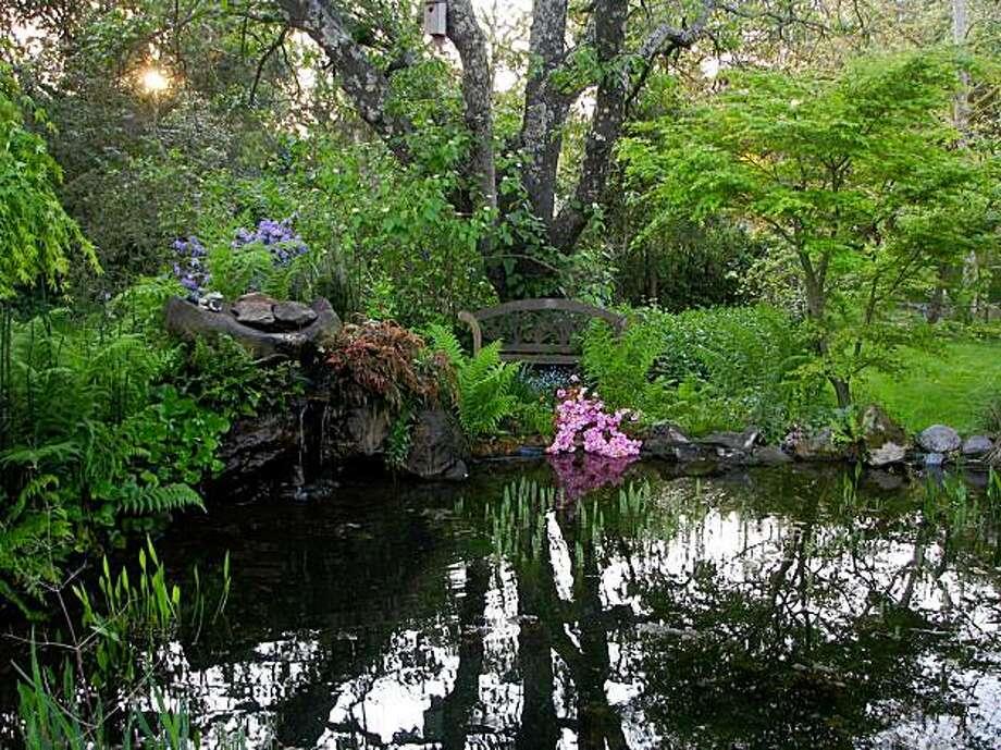 Dave and Kathy Biggs' Sebastopol pond. Photo: Kathy Biggs