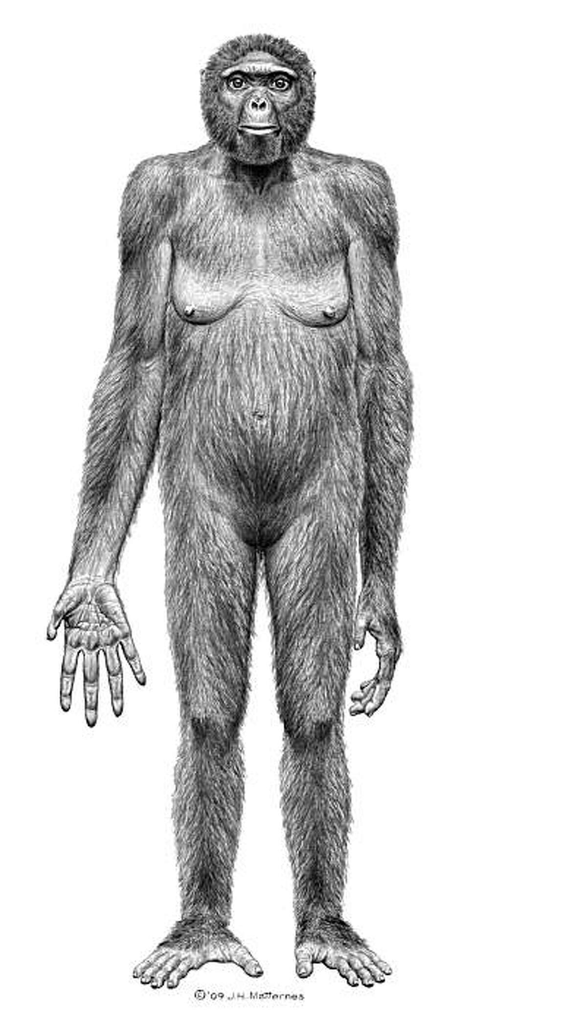 """This image released October 1, 2009 by """"Science"""" shows the probable life appearance in anterior view of Ardipithecuss ramidus(""""Ardi""""). In a special issue of Science, an international team of scientists has for the first time thoroughly described Ardipithecus ramidus, a hominid species that lived 4.4 million years ago in what is now Ethiopia. This research, in the form of 11 detailed papers and more general summaries, will appear in the journal's October 2, 2009 issue. AFP PHOTO/HO/SCIENCE/J.H. Mattemes = RESTRICTED TO EDITORIAL USE = No ARCHIVES = (Photo credit should read HO/AFP/Getty Images)"""