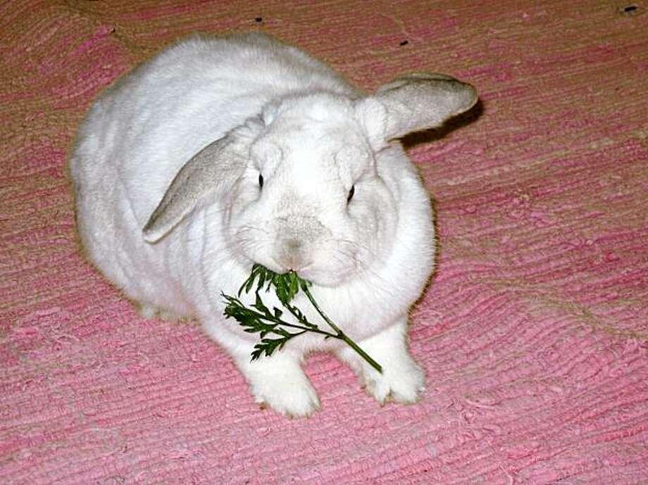 Ruffles the rabbit Photo: Lori Barak