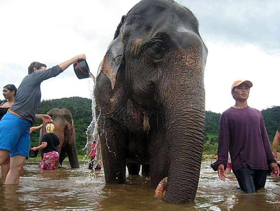 Visitors bathe elephants in a river in the Mae Taeng Valley at the Elephant Nature Park in Chiang Mai province, Thailand on August 15, 2008. Photo: Dan Jung, The Chronicle