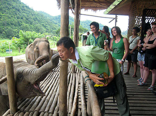 An elephant gives a kiss to one of the guides at the Elephant Nature Park in Chiang Mai province, Thailand on August 15, 2008. Photo: Dan Jung, The Chronicle