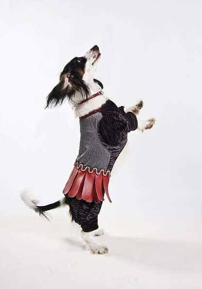 Odie, a Piebald Dachshund, shows off his wears dancing for the camera. Odie went on to win the best