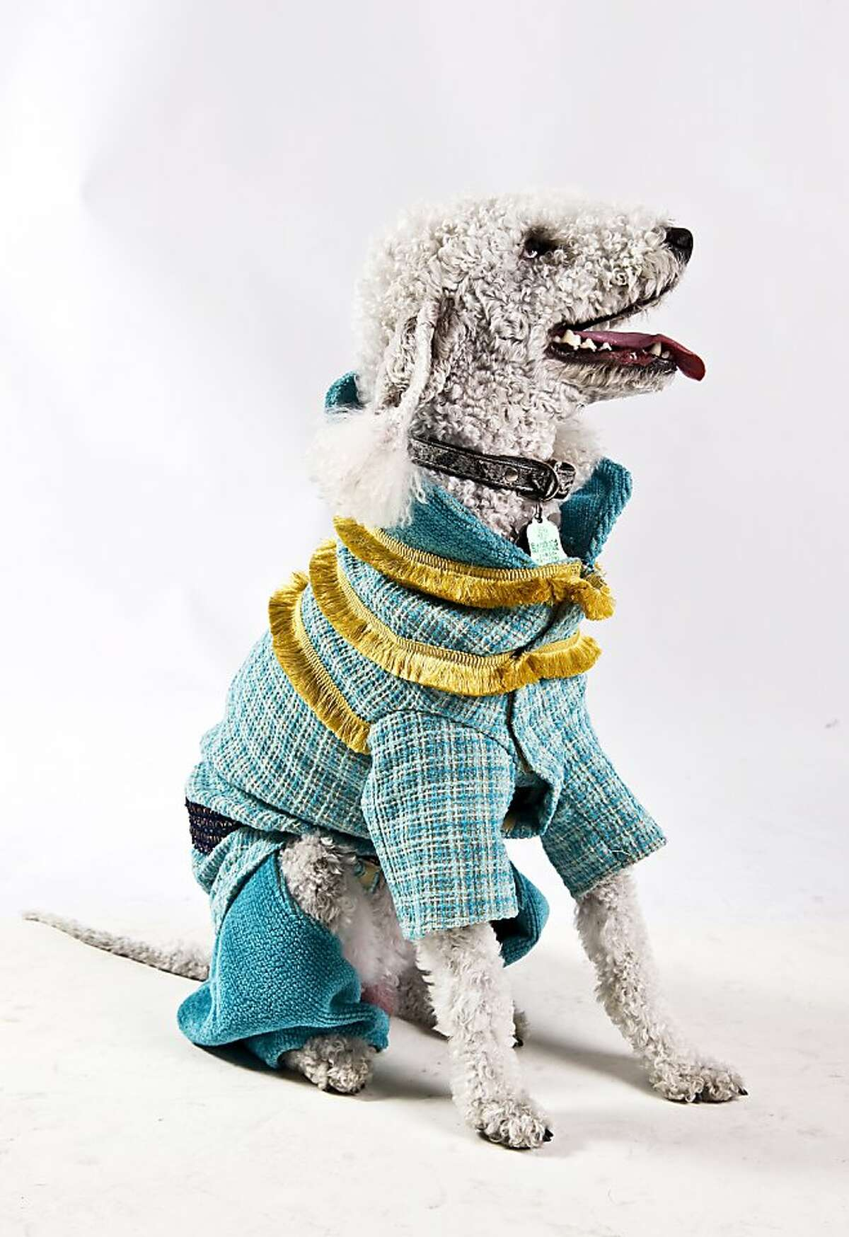 Pushkin, a Bedlington Terrier, is wearing a costume inspired by Chanel?•s Byzance Collection. The fabric is donated by Sloa Miyasato and sewing by Belmar Fine Custom Upholstery. The jacket fabric is Coco Tweed and the trousers are Montecatini, both in Carribe. Pushkin's person is Ilona Berylant. Haute Dog SF a fashion show of San Francisco's fashion aware dogs held Friday February 3, 2012 at the San Francisco Design Center. The show included 60+ dogs taking to the runway to strut their stuff. The event was a benefit for Canine Companions.
