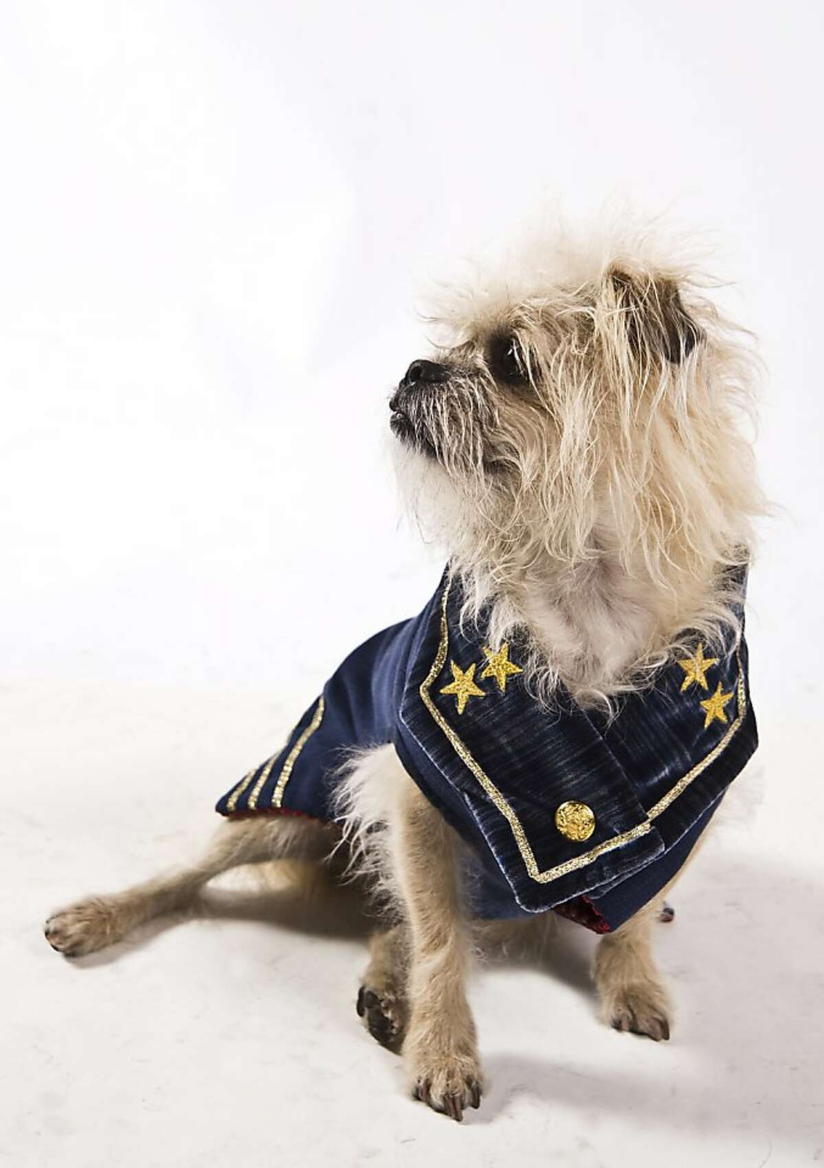 Napoleon, a Brussels Griffon/ Pug mix, he is wearing a 19th century-inspired bespoke navy blue coat designed and made by Susan Chastain. Fabric by Villa Romo. Napoleon was escorted for the evening by Alisa Carroll who had him on loan from Stevie Stacionis and Josiah Baldivino. Haute Dog SF a fashion show of San Francisco's fashion aware dogs held Friday February 3, 2012 at the San Francisco Design Center. The show included 60+ dogs taking to the runway to strut their stuff. The event was a benefit for Canine Companions.