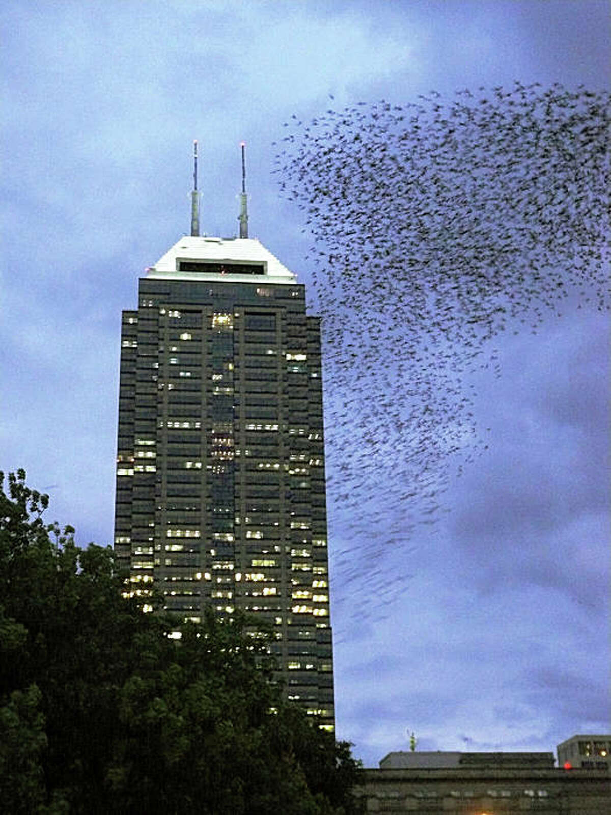 This undated image provided by the U.S. Department of Agriculture shows a flock of European starlings massing in downtown Indianapolis, Indiana in the fall of 2008. Starlings have become a nuisance in several urban areas across the country. (AP Photo/USDA)
