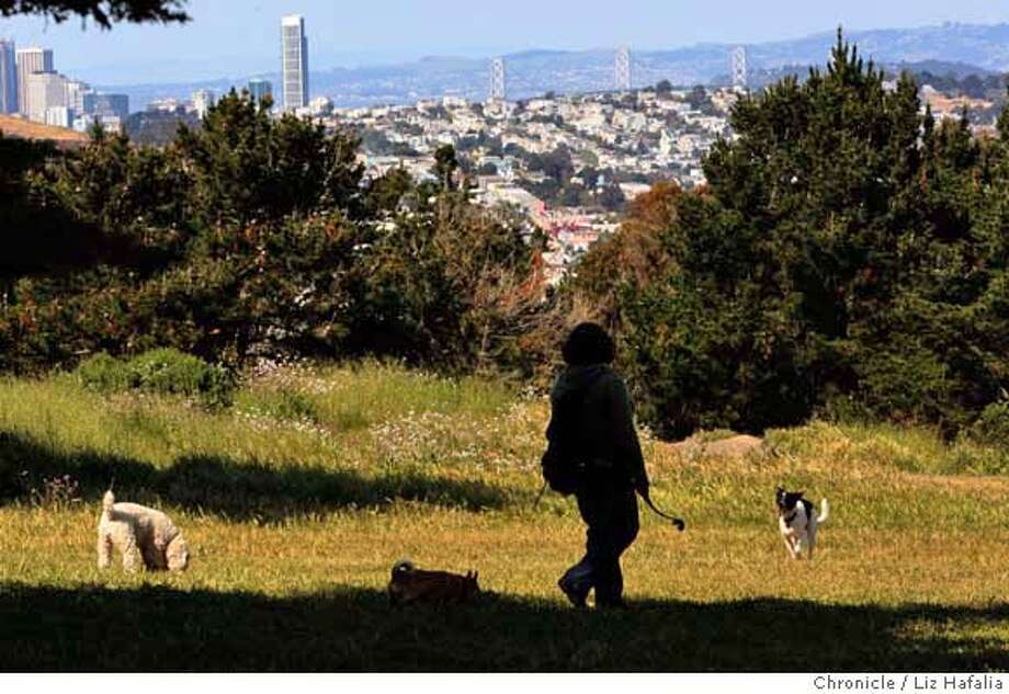 ###Live Caption:Michelle Guzman, dog walker of Barks in Parks, taking Jersey (right), Lady (middle), and Copper (left) for a walk at the dog park at John McLaren Park in San Francisco, Calif., overlooking the city on Monday, April 21, 2008.  Photo by Liz Hafalia / San Francisco Chronicle###Caption History:Michelle Guzman, dog walker of Barks in Parks, taking Jersey (right), Lady (middle), and Copper (left) for a walk at the dog park at John McLaren Park in San Francisco, Calif., overlooking the city on Monday, April 21, 2008.  Photo by Liz Hafalia / San Francisco Chronicle###Notes:Michelle Guzman, dog walker of Barks in Parks, taking Jersey (right), Lady (middle), and Copper (left) for a walk at the dog park at John McLaren Park in San Francisco, Calif., overlooking the city on Monday, April 21, 2008.  Liz Hafalia / The Chronicle /###Special Instructions:�2008, San Francisco Chronicle/ Liz Hafalia  MANDATORY CREDIT FOR PHOTOG AND SAN FRANCISCO CHRONICLE. NO SALES- MAGS OUT. Photo: Liz Hafalia