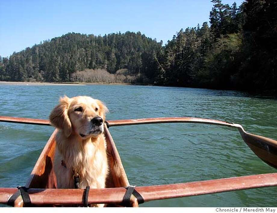 ###Live Caption:Stella, the author's golden retriever, acts as coxswain on a canoe specially designed for dogs and their owners on the Big River near Mendocino.###Caption History:Stella, the author's golden retriever, acts as coxswain on a canoe specially designed for dogs and their owners on the Big River near Mendocino.###Notes:###Special Instructions: Photo: Meredith May