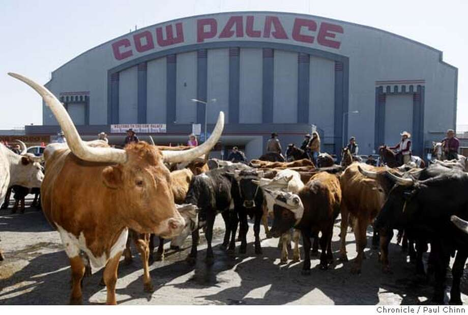 ###Live Caption:A herd of cattle pause in the Cow Palace parking lot after their arrival for the 63rd annual Grand National Rodeo, Horse & Stock Show in Daly City, Calif., on Thursday, April 3, 2008. The event runs from April 4 thru April 12.  Photo by Paul Chinn / San Francisco Chronicle###Caption History:A herd of cattle pause in the Cow Palace parking lot after their arrival for the 63rd annual Grand National Rodeo, Horse & Stock Show in Daly City, Calif., on Thursday, April 3, 2008. The event runs from April 4 thru April 12.  Photo by Paul Chinn / San Francisco Chronicle###Notes:###Special Instructions:MANDATORY CREDIT FOR PHOTOGRAPHER AND S.F. CHRONICLE/NO SALES - MAGS OUT Photo: Paul Chinn
