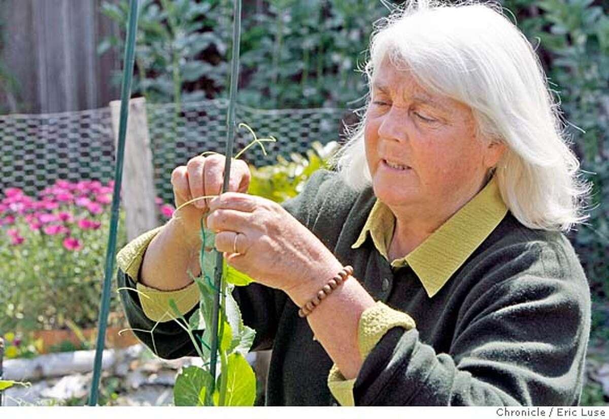 """###Live Caption:Green Gulch gardener Wendy Johnson has a new book """"Gardening at the Dragon's Gate."""" Johnson, photographed on Thursday, April 4, 2008 in the Alameda, Calif. garden of freelance writer Don Lattin. Photo by Eric Luse / San Francisco Chronicle Freelance writer Don Lattin gets some tips with his Snap Peas from Green Gulch gardener Wendy Johnson. She has a new book """"Gardening at the Dragon's Gate"""" photographed on Thursday, April 4, 2008 in Lattin's Alameda, Calif. garden. Photo by Eric Luse / San Francisco Chronicle###Caption History:Green Gulch gardener Wendy Johnson has a new book """"Gardening at the Dragon's Gate."""" Johnson, photographed on Thursday, April 4, 2008 in the Alameda, Calif. garden of freelance writer Don Lattin. Photo by Eric Luse / San Francisco Chronicle Freelance writer Don Lattin gets some tips with his Snap Peas from Green Gulch gardener Wendy Johnson. She has a new book """"Gardening at the Dragon's Gate"""" photographed on Thursday, April 4, 2008 in Lattin's Alameda, Calif. garden. Photo by Eric Luse / San Francisco Chronicle###Notes:Name cq by source Don Lattin Wendy Johnson###Special Instructions:MANDATORY CREDIT FOR PHOTOG AND SAN FRANCISCO CHRONICLE/NO SALES-MAGS OUT"""