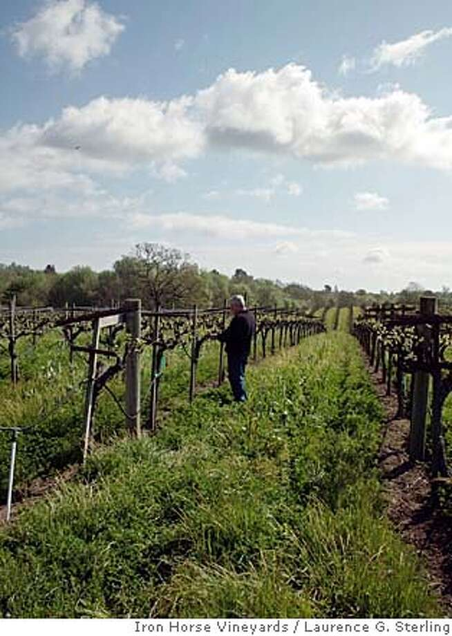 ###Live Caption:Iron Horse Vineyards winemaker David Munksgard 'shoot thins' some Chardonnay vines.###Caption History:Iron Horse Vineyards winemaker David Munksgard 'shoot thins' some Chardonnay vines.###Notes:###Special Instructions: Photo: Laurence G. Sterling