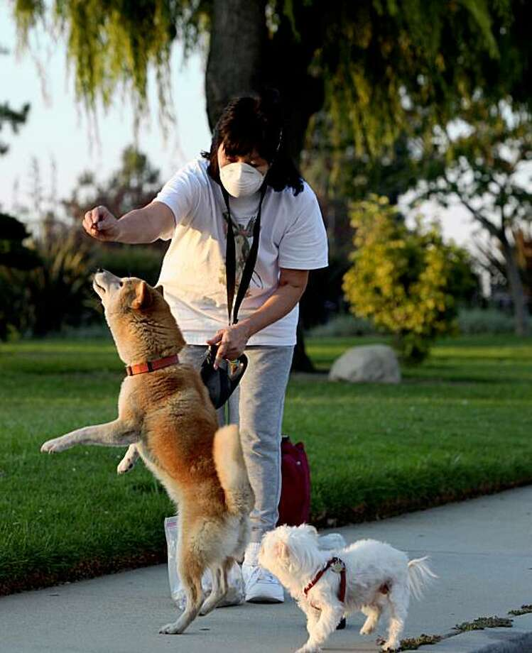 Marci Masuda, who wears a mask to protect herself from lingering wildfire smoke, walks her dogs, Foxy, left, and Punkin, Thursday, Aug. 27, 2009, in Monterey Park, Calif.  Two wildfires in the Angeles National Forest northeast of Los Angeles continue to burn as fire crews face another day of high heat. (AP Photo/Nick Ut) Photo: Nick Ut, AP