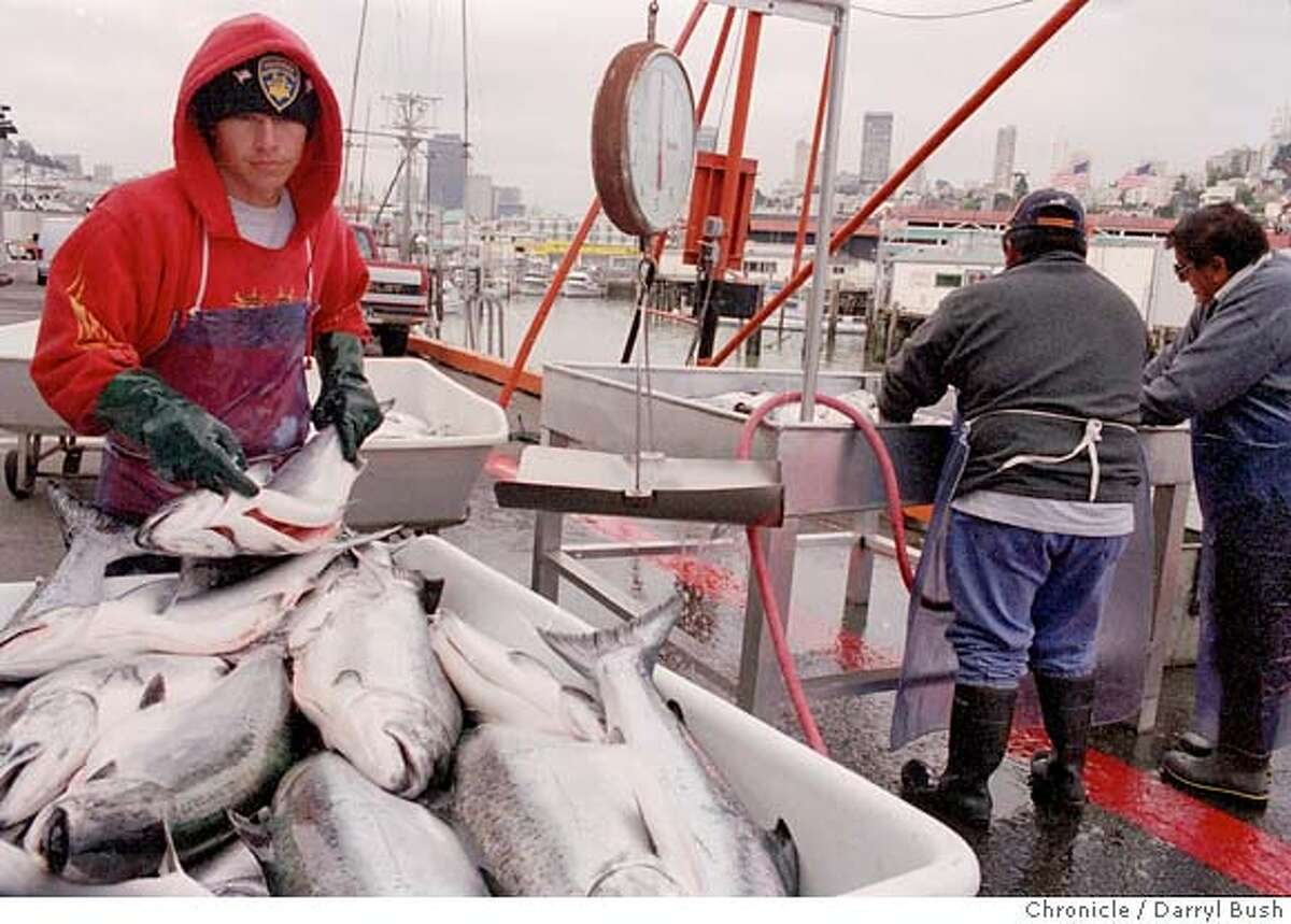 ###Live Caption:WHARF11-C-14JUN02-MG-DB Workers unload and weigh salmon as its hauled off the boat at Pier 45 at Fisherman's Wharf in San Francisco. Chronicle Photo by Darryl Bush###Caption History:WHARF11-C-14JUN02-MG-DB Workers unload and weigh salmon as its hauled off the boat at Pier 45 at Fisherman's Wharf in San Francisco. Chronicle Photo by Darryl Bush###Notes:###Special Instructions:
