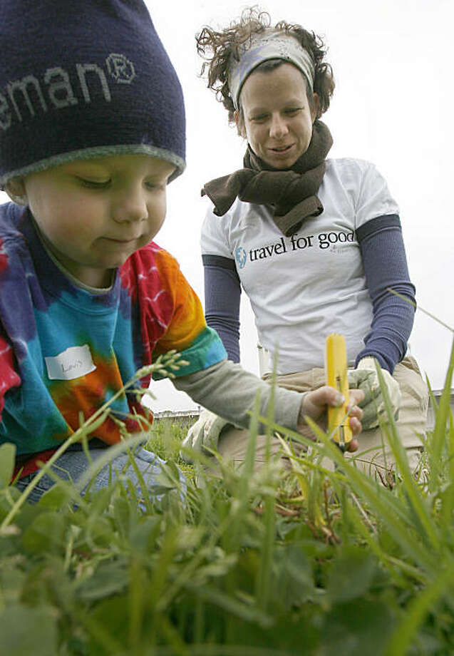 Volunteers pull weeds at Crissy Field during National Public Lands Day. Photo: Tony Avelar, Special To The Chronicle