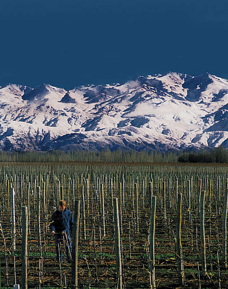 Agrelo subregion of the Mendoza winegrowing region in Argentina. Catena Zapata vineyards, with the Andes in the background.