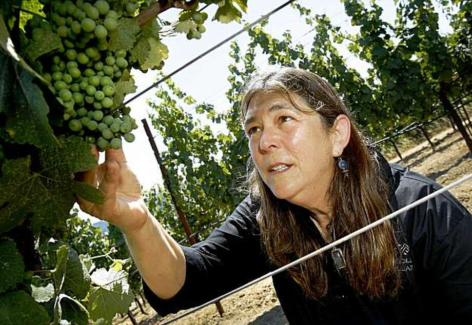 Winemaker Milla Handley likes to walk through the Gewurztraminer vineyards looking at the growth of the grapes which turn pink later in the season. Milla Handley is the winemaker for Hanley Cellars off highway 128 in the Anderson Valley of Mendocino County. Photo: Brant Ward, The Chronicle