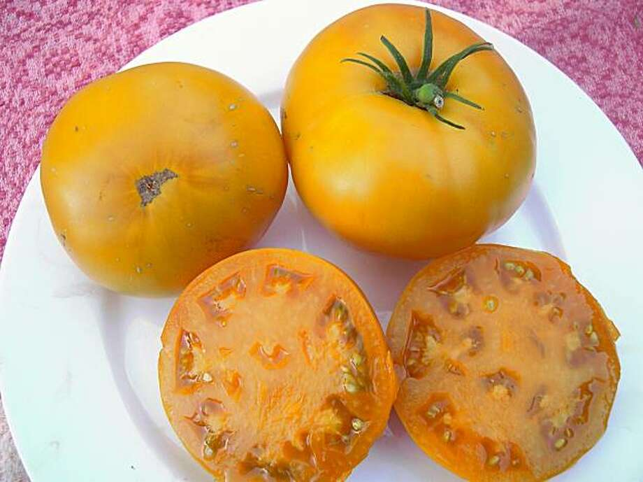 Yellow 'Brandywine' tomatoes Photo: Lynette Evans, The Chronicle