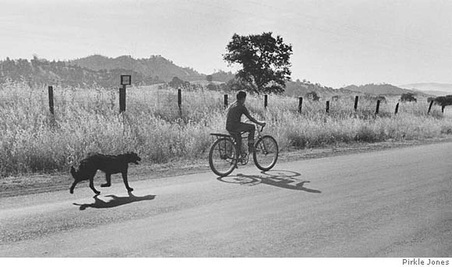 "A photo by Pirkle Jones from the 2008 Napa Valley Museum exhibition ""Berryessa Valley: The Last Year,"" shot in 1956 in the town of Monticello just before Lake Berryessa was created. The photographer, who lives in Mill Valley, worked with Dorothea Lange on the project. Ran on: 03-16-2008  &quo;Larry Gardner on Bicycle With Dog,&quo; a photo by Pirkle Jones, is part of the Napa Valley Museum exhibition &quo;Berryessa Valley: The Last Year.&quo; It was shot in 1956 in Monticello just before Lake Berryessa was created. Photo: Pirkle Jones"