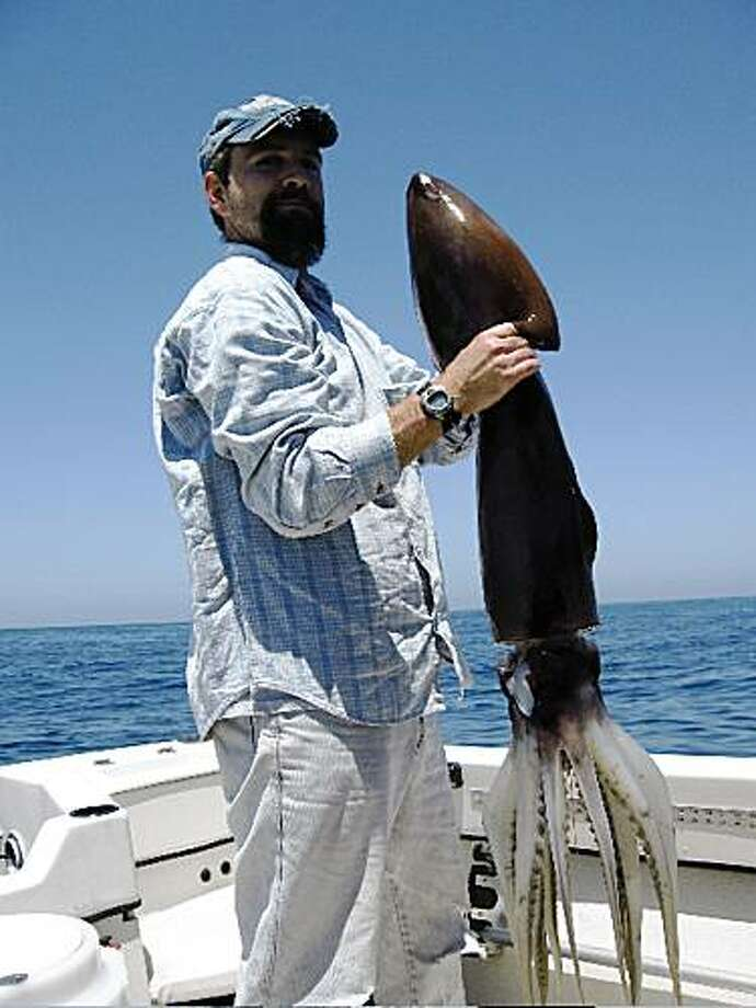 This  March 2005 image provided by the National Marine Fisheries Service shows John Hyde, a marine biologist with the National Marine Fisheries Service, holding a Humboldt squid, also known as a jumbo flying squid,  caught off the San Diego coast. The rare squid have returned to the area wreaking havoc on local divers.   (AP Photo/National Marine Fisheries Service) Photo: AP