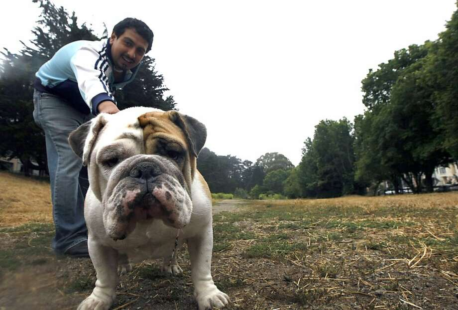Irving Zapapa holds onto his dog Max an English Bulldog that loves people Tuesday July 21, 2009. Residents in the area of 7th and Lawton in San Francisco use an empty lot owned by the San Francisco Unified School District  to exercise their dogs. Because of restrictions on its use, it sits idle most of the year until fall when it's used as a pumpkin patch and Christmas tree lot. Photo: Lance Iversen, The Chronicle