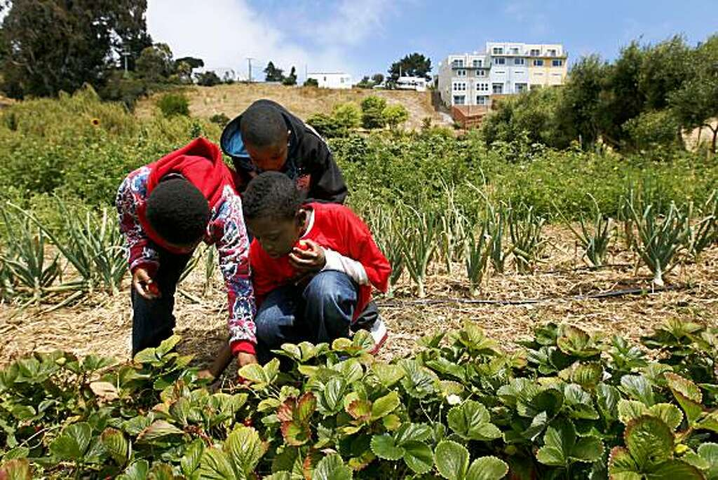 Marquise Brown, Christian Elmore And Robert Davis (L To R) Pick  Strawberries At