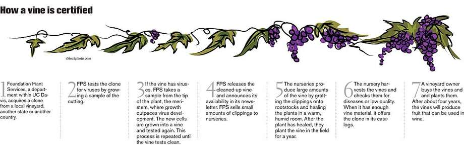How a vine is certified. Chronicle Graphic