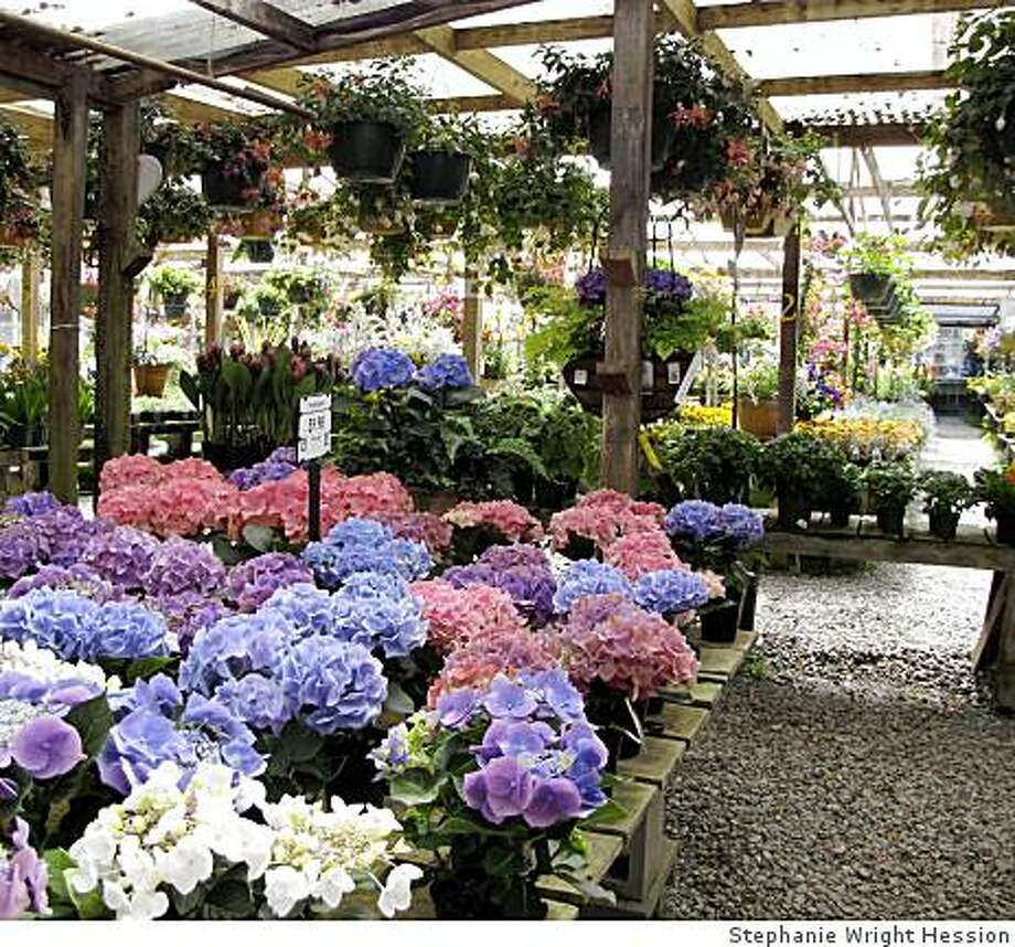 Half Moon Bay Nursery. Photo: Stephanie Wright Hession
