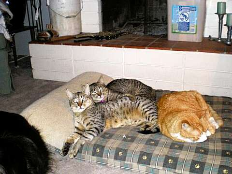 From feral kittens to loving family cats - SFGate