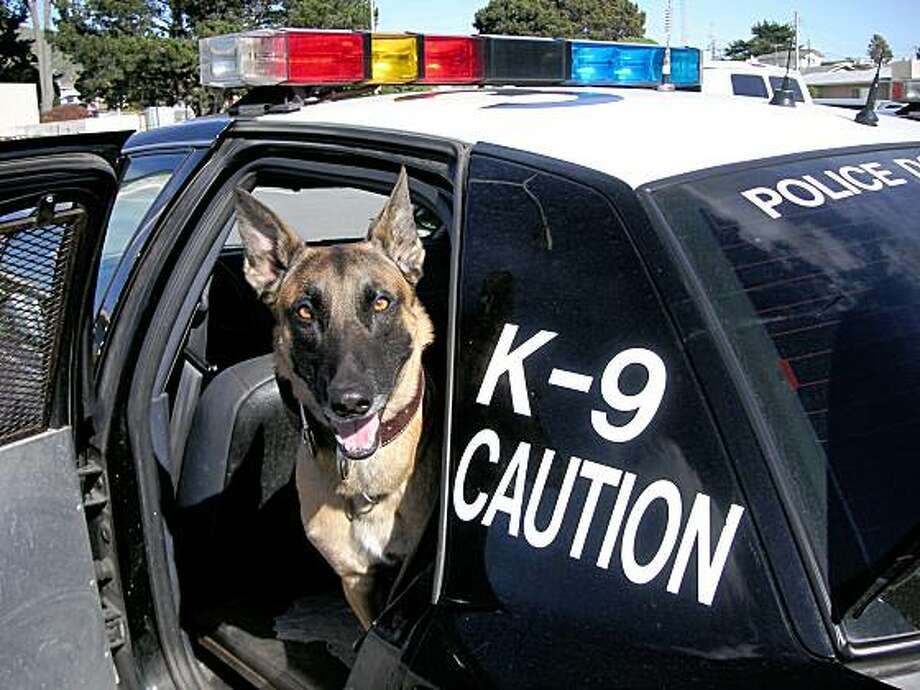 Cuda, a member of the Oakland Police Department K9 Unit, does not have a bullet-proof vest. The custom-fit canine vests costs $1,700 apiece, and many police departments can't afford them in this economy. Pet Food Express is holding fundraisers to purchase vests for half the 200 Bay Area police dogs that need them. Photo: Oakland Police Department