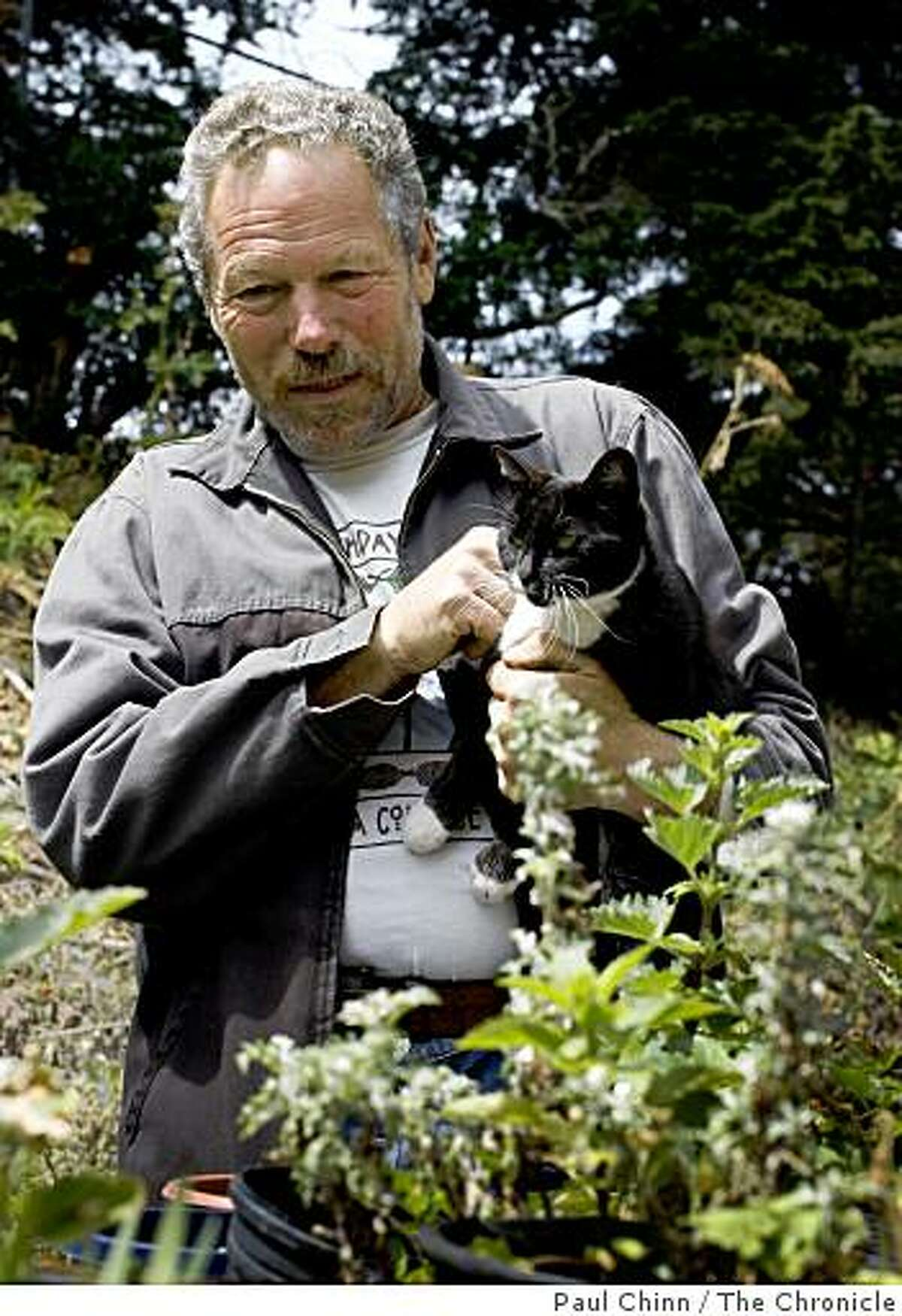 Greg Gaar looks at several varieties of native plants with Sylvia, one of two cats that reside near Gaar's Native Plant Nursery, near Kezar Stadium in San Francisco, Calif., on Thursday, July 9, 2009.