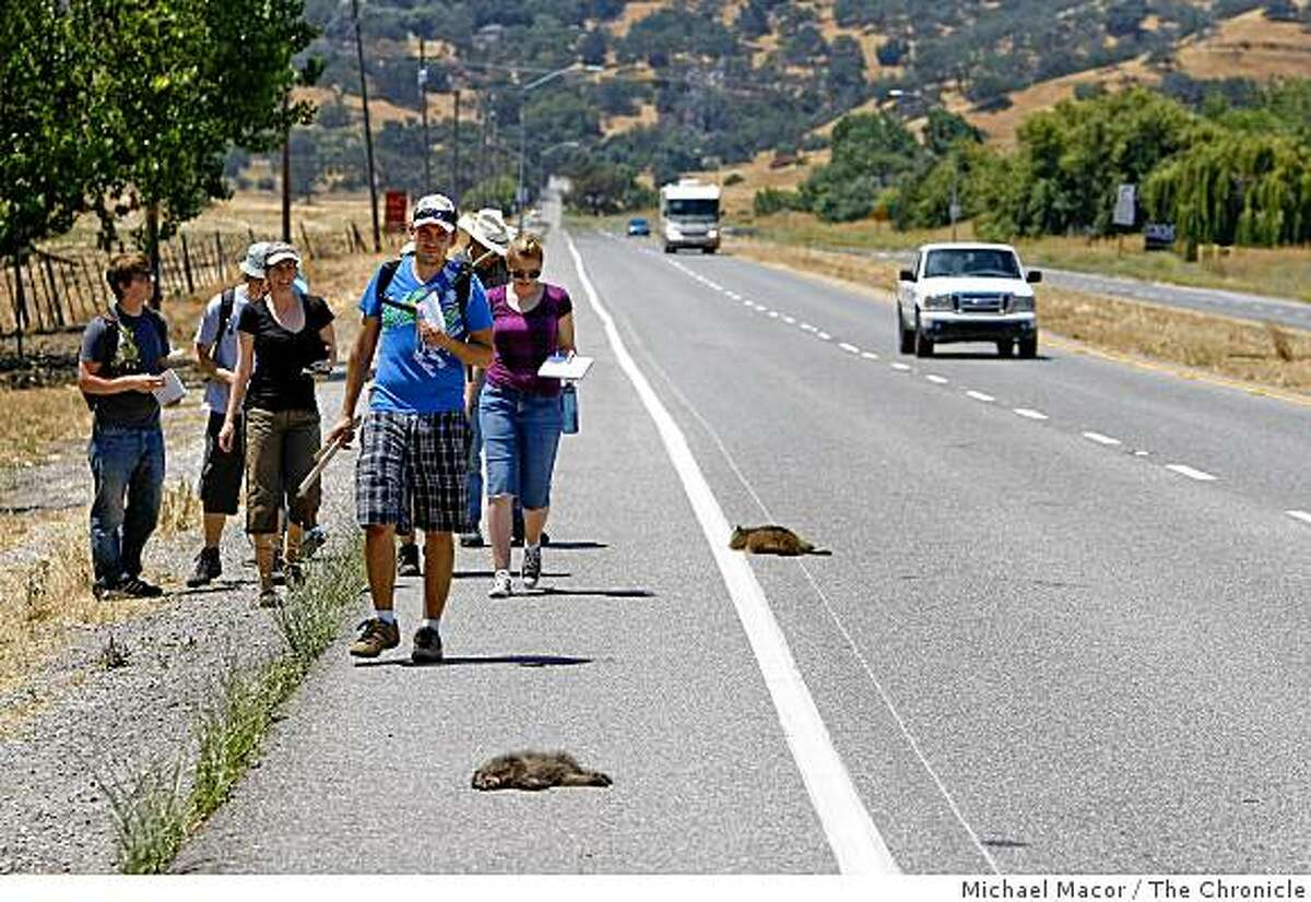 As part of the course students enrolled in the Wildlife Corridor Technician Course at DeAnza College, collecting data along the Coyote Valley on Wednesday July 2, 2009, in San Jose, Calif. Students document a family of three raccoons hit and killed along Bailey Rd. which runs throught the valley. Research being conducted to see how development has and will impact the areas wildlife and plant life.