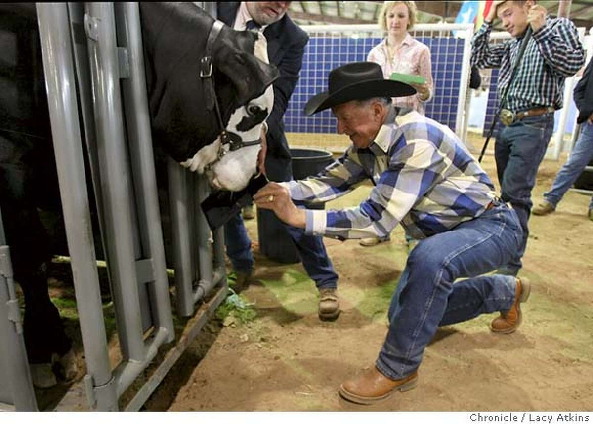 Don Richardson, the Live Stock Steer Coordinator for the 4H and FFA, gets the nose print of an American Steer, at the Star Rodeo, Saturday March 1, 2008, in Austin, Texas. Photo by Lacy Atkins / San Francisco Chronicle