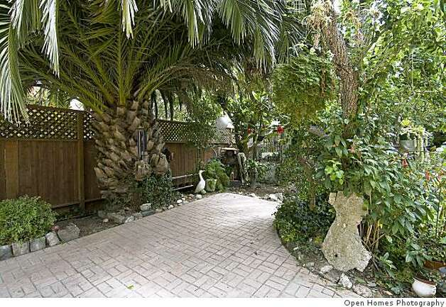 The garden with palm trees and mature fruit trees. Photo: Open Homes Photography