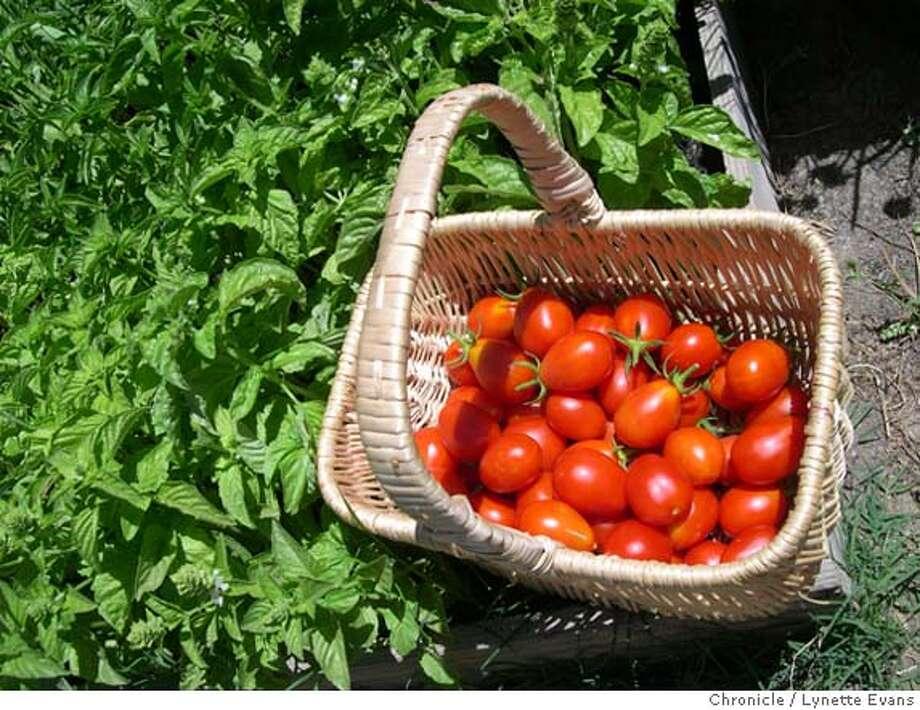'Principe Borghesi' tomatoes Photo: Lynette Evans