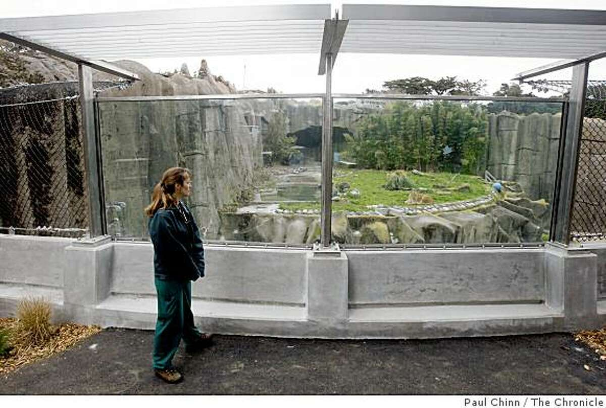 Jacqueline Jencek, chief of veterinary services at the San Francisco Zoo, looks in on African lions Amanzi and Jahari through the raised glass walls after the big cats returned to their outdoor grottos in San Francisco, Calif. on Monday, Feb. 18, 2008.
