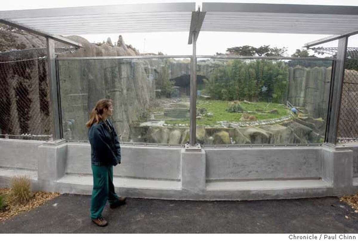 Jacqueline Jencek, chief of veterinary services at the San Francisco Zoo, looks in on African lions Amanzi and Jahari through the raised glass walls after the big cats returned to their outdoor grottos in San Francisco, Calif. on Monday, Feb. 18, 2008. The lions and tigers will spend the next several days being acclimated to the security improvements before the exhibit reopens to the public. The enhancements were made following the Christmas Day tiger mauling which resulted in the death of one visitor and injuries to two others. The big cats had been kept inside the Lion House for the past several weeks. PAUL CHINN/San Francisco Chronicle