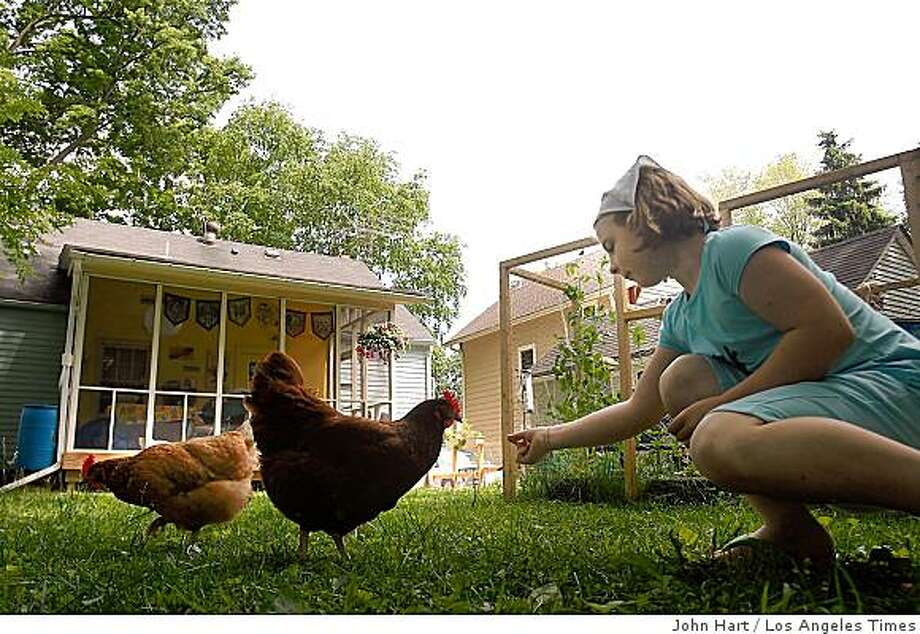 """CHICKENS: Evie Lynch, 9, and her family keep Lucy and Flicka in their Madison, Wis., back yard. Evie walks Flicka every night. """"They're cute,"""" she says. """"They like to snuggle in my arms."""" They also supply a daily egg apiece. Illustrates CHICKENS (category a) by P.J. Huffstutter (c) 2009, Los Angeles Times. Moved Wednesday, June 17, 2009. (MUST CREDIT: Photo for the Los Angeles Times by John Hart.)  Evie Lynch, 9, and her family keep Lucy and Flicka in their Madison, Wis., back yard. Evie walks Flicka every night. """"They're cute,"""" she says. """"They like to snuggle in my arms."""" They also supply a daily egg apiece. Illustrates CHICKENS (category a) by P.J. Huffstutter (c) 2009, Los Angeles Times. Moved Wednesday, June 17, 2009. (MUST CREDIT: Photo for the Los Angeles Times by John Hart.) Photo: John Hart, Los Angeles Times"""