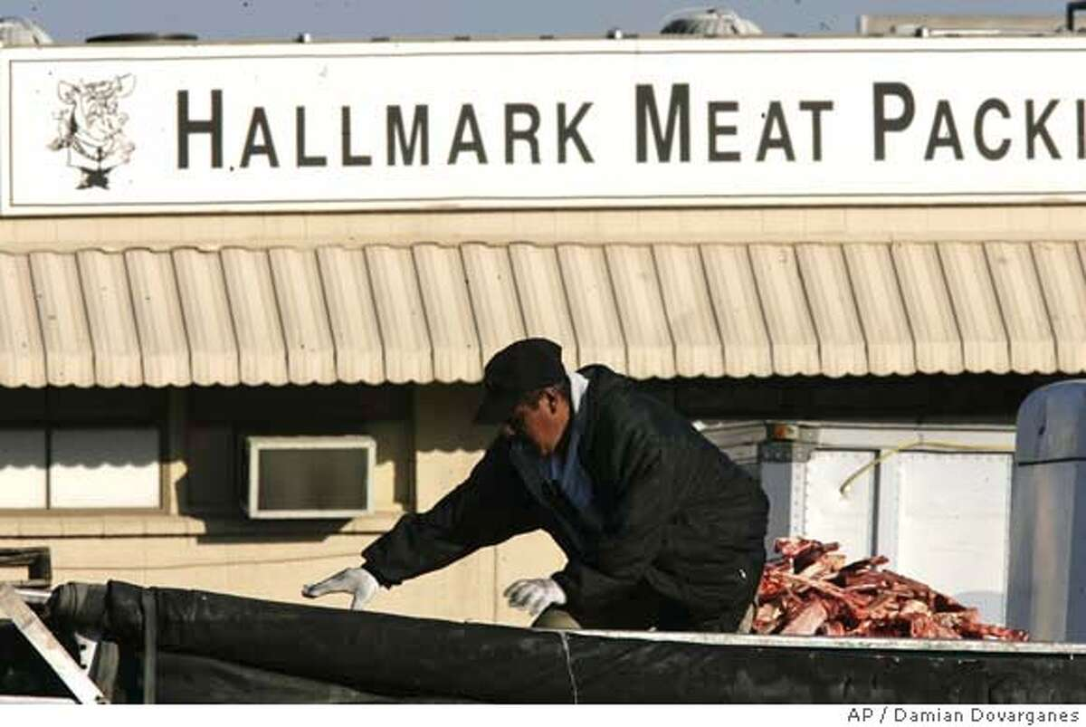 A worker walks on top of cattle carcases scraps dropped into a parked truck at the Hallmark Meat Packing slaughterhouse in Chino, Calif. Wednesday, Jan. 30, 2008. Video footage showed workers at Hallmark Meat Packing repeatedly kicking cows and ramming them with the blades of a forklift as the animals squealed in pain. Hallmark supplies the Westland Meat Company, which processes the carcasses. The facility is a major supplier to a USDA program that distributes beef to needy families, the elderly and to schools through the National School Lunch Program. (AP Photo/Damian Dovarganes)