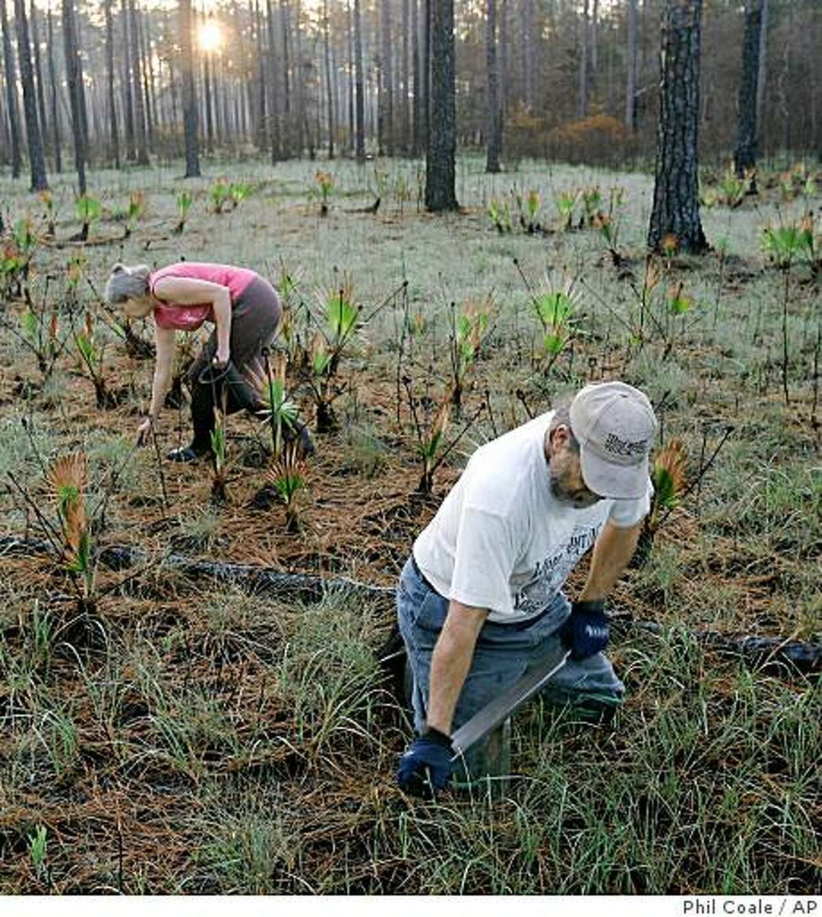 Gary Revell, right, and his wife Audrey harvest earth worms in the woods of the Apalachicola National Forest, Friday, May 15, 2009, in Samatra, Fla. Revell drives a