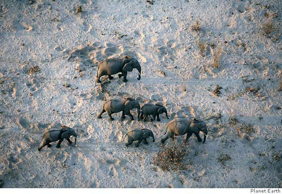 "Shot of African Elephants from book ""Planet Earth: As You've Never Seen it Before"" Photo: Handout"
