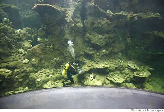 Corals Begin Arriving At Academy Of Sciences Sfgate