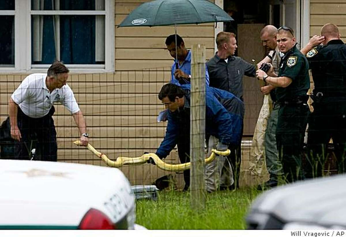Law enforcement officials remove a 12-foot long albino Burmese python from the home where it killed 2-year-old Shaunnia Hare in Oxford, Fla. on Wednesday morning, July 1, 2009. The Sumter County Sheriff's Office said Charles Jason Darnell, the snake's owner and the boyfriend of Shaunnia's mother, discovered the snake missing from its aquarium and went to the girl's room, where he found it on the girl and bite marks on her head. Darnell, 32, stabbed the snake until he was able to pry the child away. (AP Photo/St. Petersburg Times, Will Vragovic) ** MANDATORY CREDIT: ST. PETERSBURG TIMES; OUT TAMPA; OUT USA TODAY; OUT HERNANDO TODAY; OUT CITRUS COUNTY CHRONICLE; NO MAGS; NO SALES **
