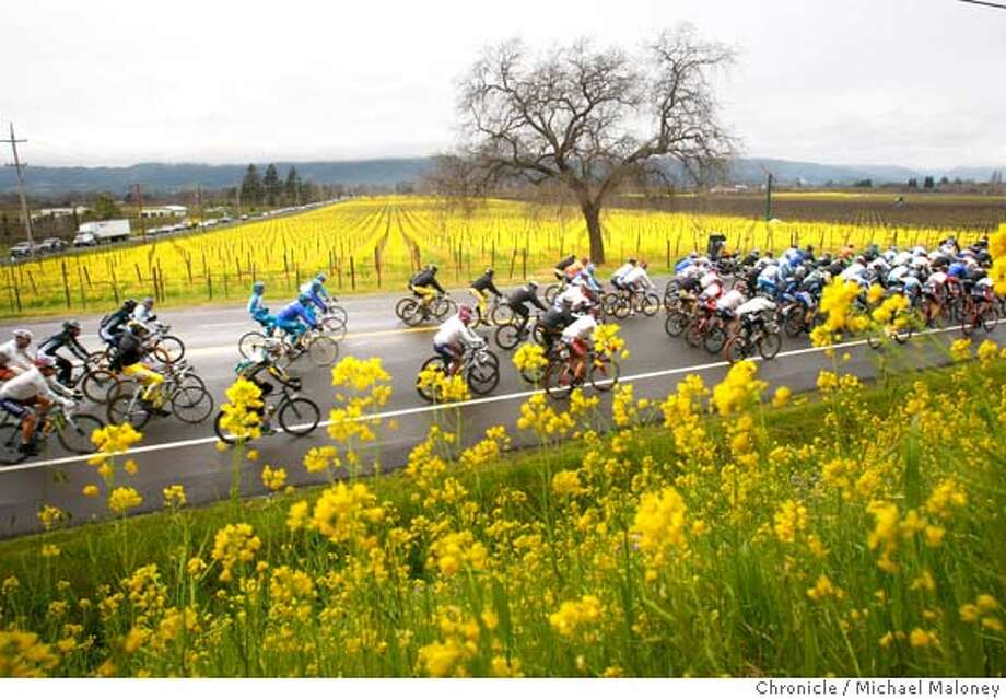 The colorful peloton pedals on the Silverado Trail past the mustard covered vineyards near Oakville, CA in the Napa Valley on February 19, 2008.  Stage 2 of the Amgen Tour of California pro bicycle race took the riders on a 115.8 mile route from Santa Rosa to Sacramento.  Photo by Michael Maloney / The Chronicle Photo: Michael Maloney