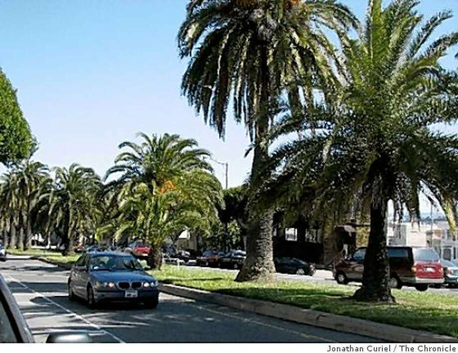 palms along dolores in s.f. near 30th Photo: Jonathan Curiel, The Chronicle