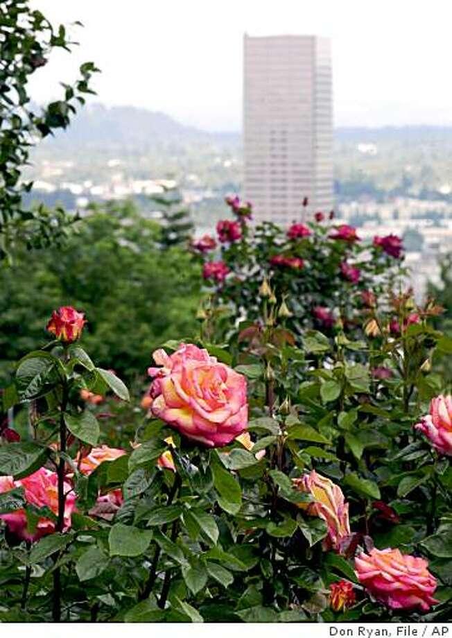 Roses in June Photo: Don Ryan, File, AP