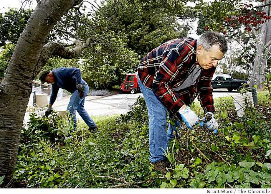George Leeds (right), a parks volunteer, clears some ivy from hydranga flowers, that they were alerted to by ParkScan. San Francisco's ParkScan service lets park users alert officials about problems they spot. Photo: Brant Ward, The Chronicle